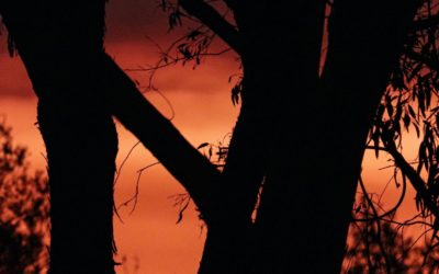Displacement and climate denial: counting the cost of Australia's bushfire crisis